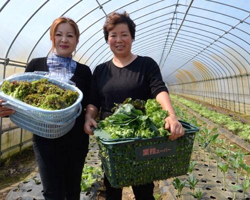 契約農家から直送の国産野菜